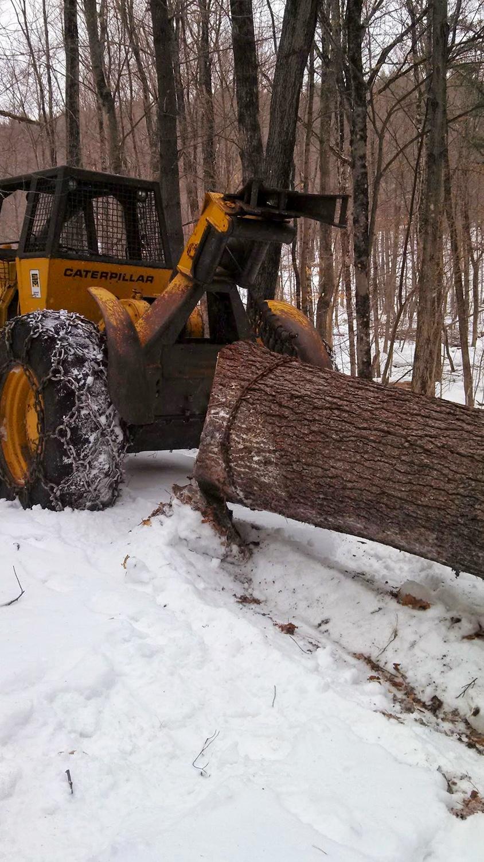 Timber Harvesting/Logging