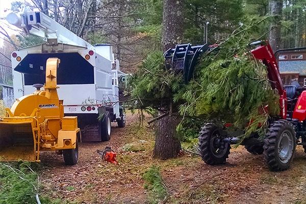 tree branch hauling