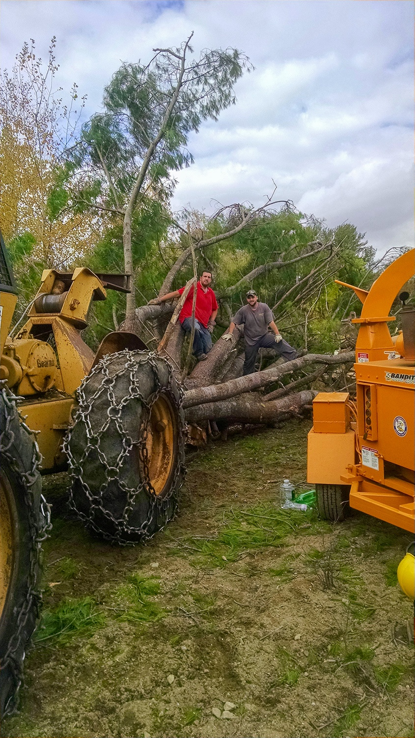 JW Land Clearing workers standing near large tree they are removing