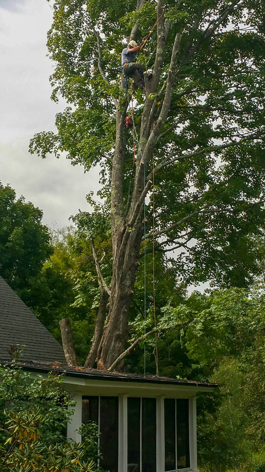 JW Land Clearing doing storm damage cleanup by pulling a tree from the roof of a home